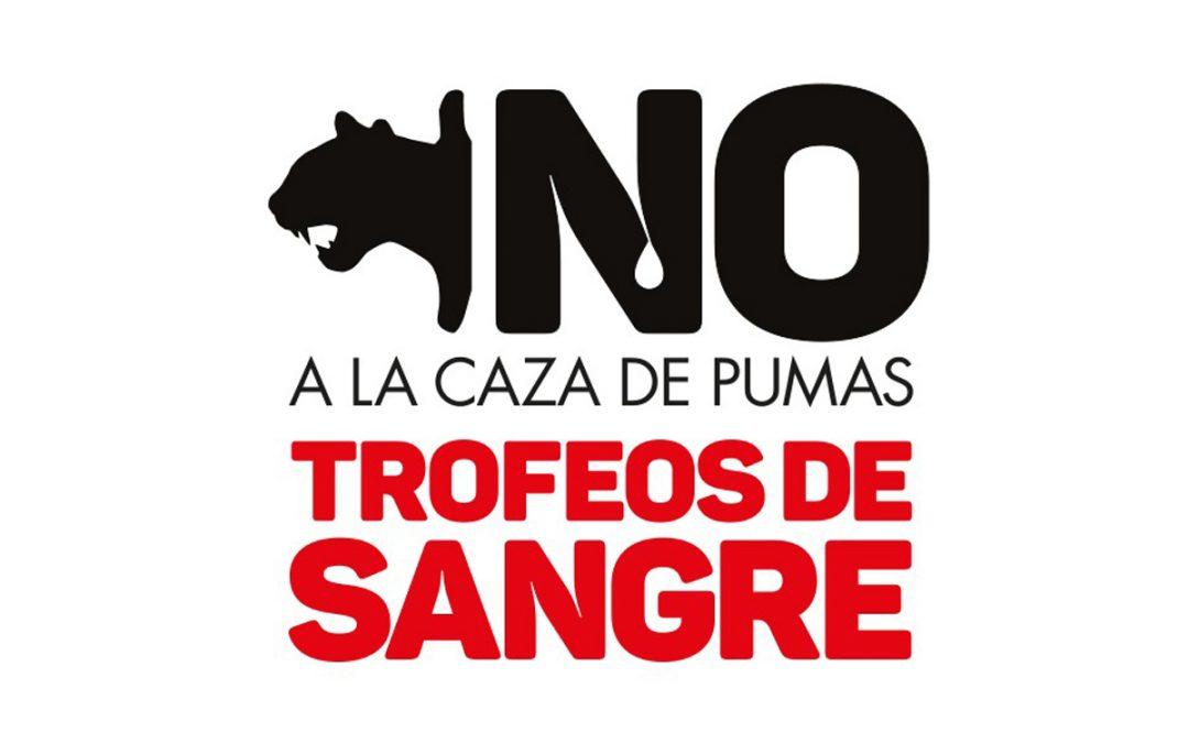 No a la caza de pumas trofeos de sangre